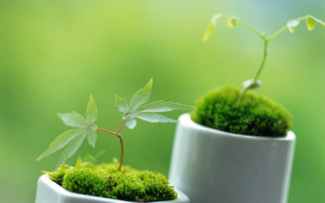 Little ornamental plants wallpaper