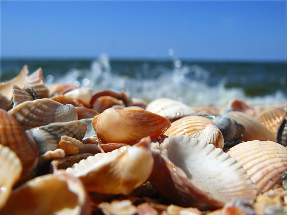 Seashells on beach wallpaper