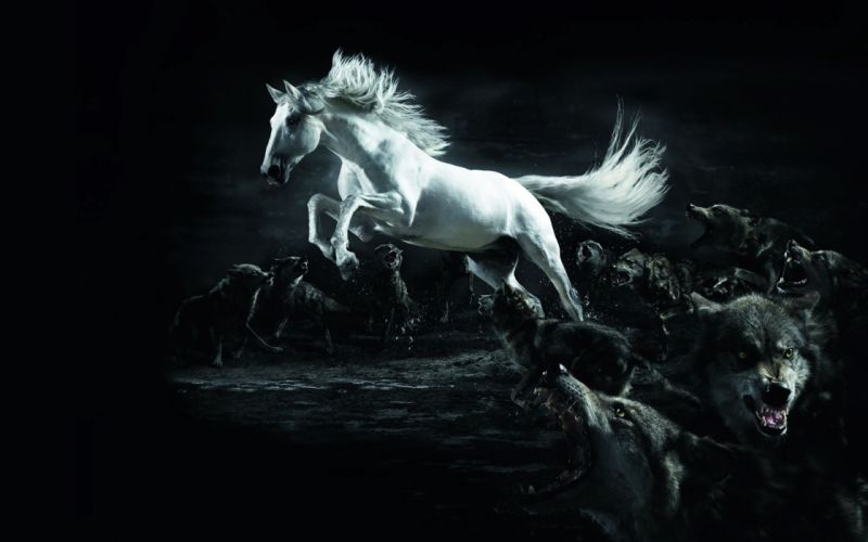 White horse attacked wallpaper