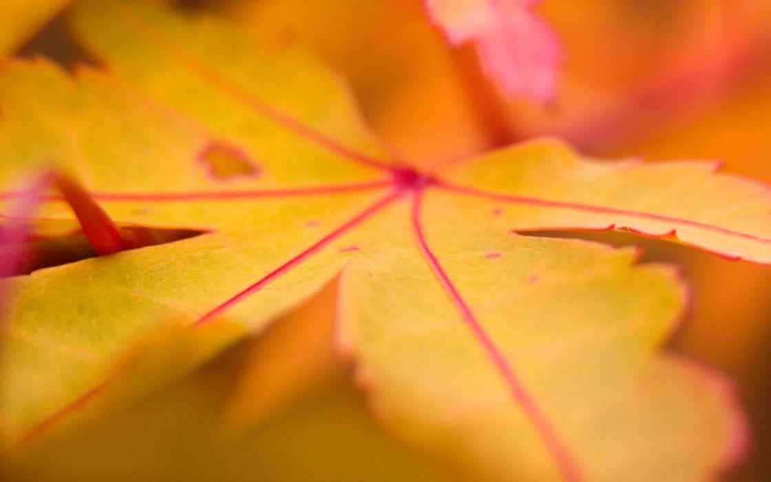 Yellow leaf wallpaper