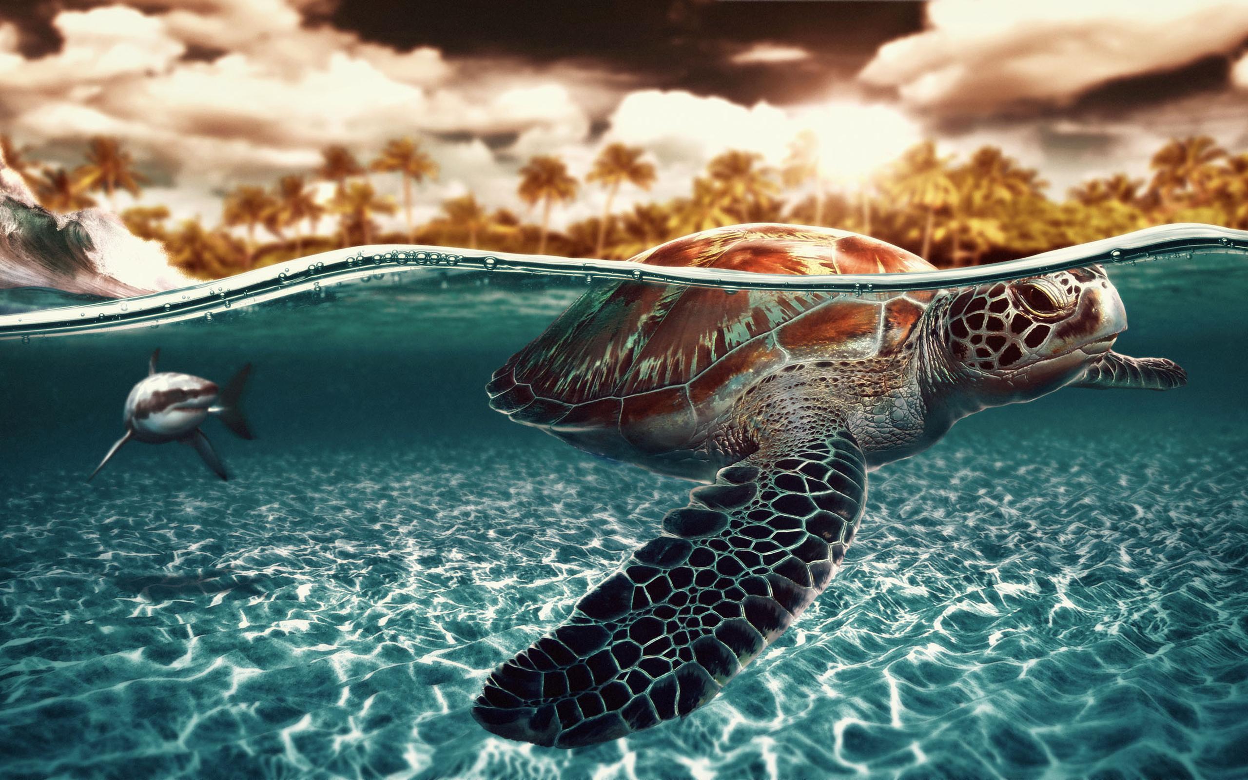 Sea turtle wallpaper | 2560x1600 | 6079 | WallpaperUP