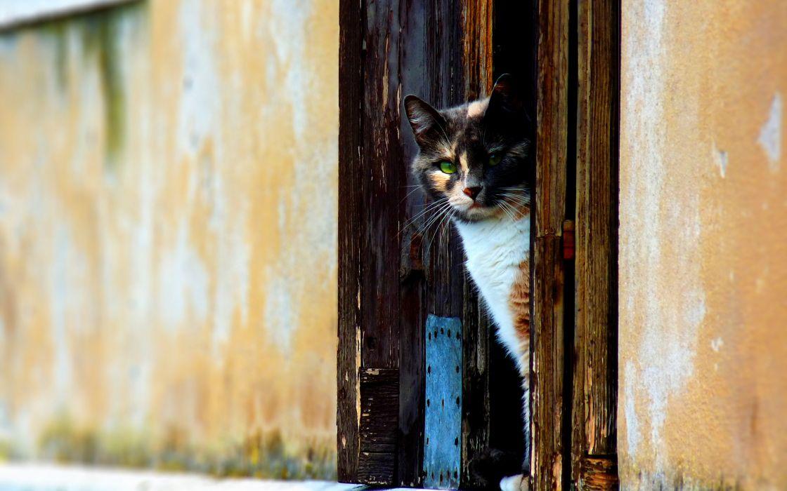 Venetian cat wallpaper