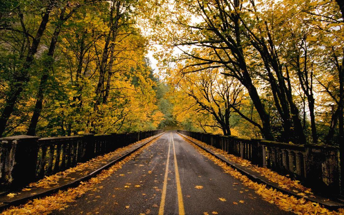Autumn way wallpaper