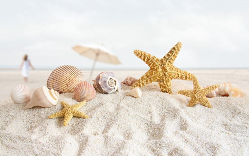 Summer sea shells wallpaper