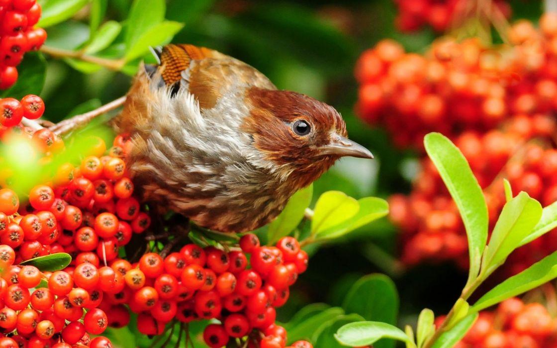 Young bird wallpaper