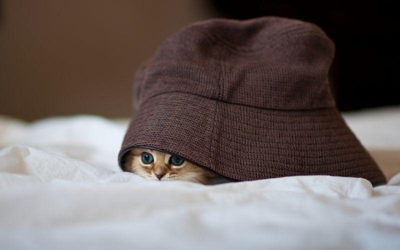 Little kitty hiding wallpaper