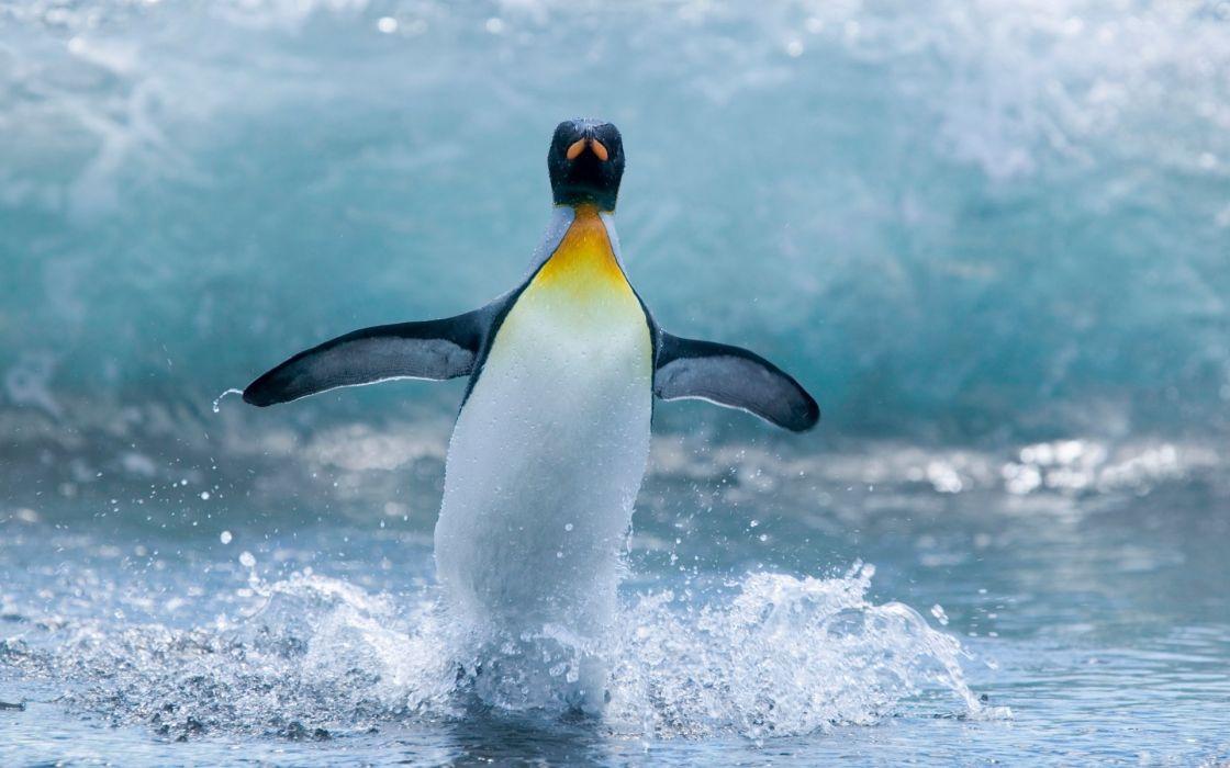 Beautiful penguin wallpaper