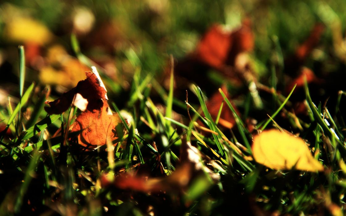Grass and yellow leaves wallpaper