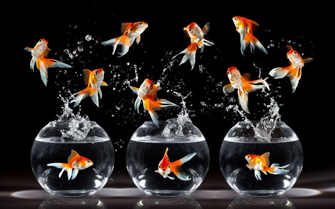 Happy fish wallpaper