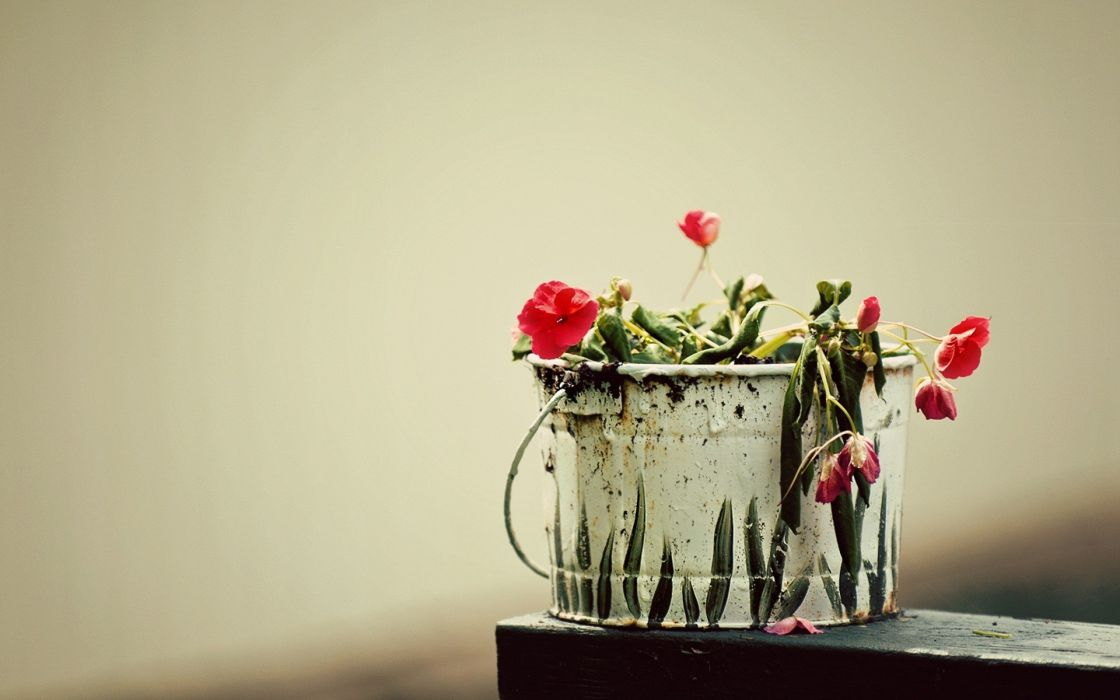 Pail with flowers wallpaper