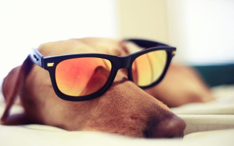 Best dogs photos wallpaper