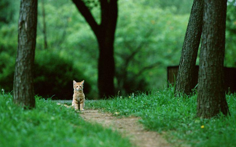 Alone cat wallpaper