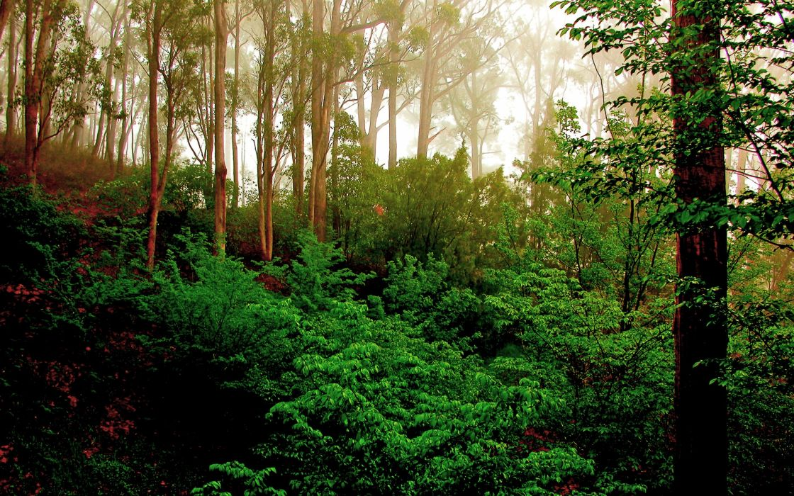 Green forest trees wallpaper