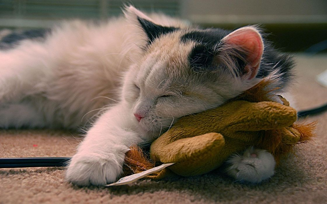 Cat sleeping wit a toy wallpaper