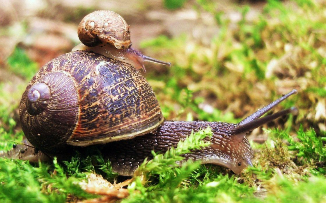 Snail on snail wallpaper