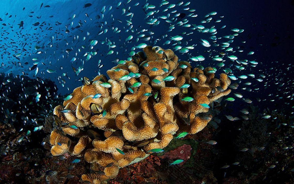 Underwater world sea life wallpaper