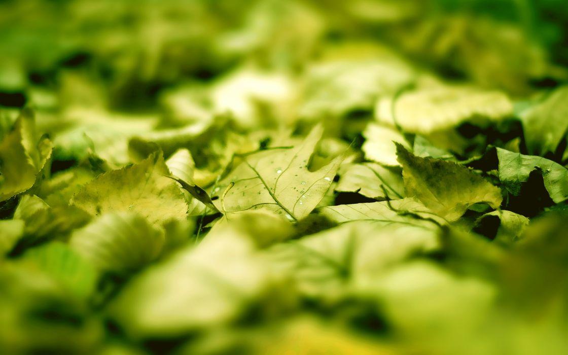 Las hojas wallpaper