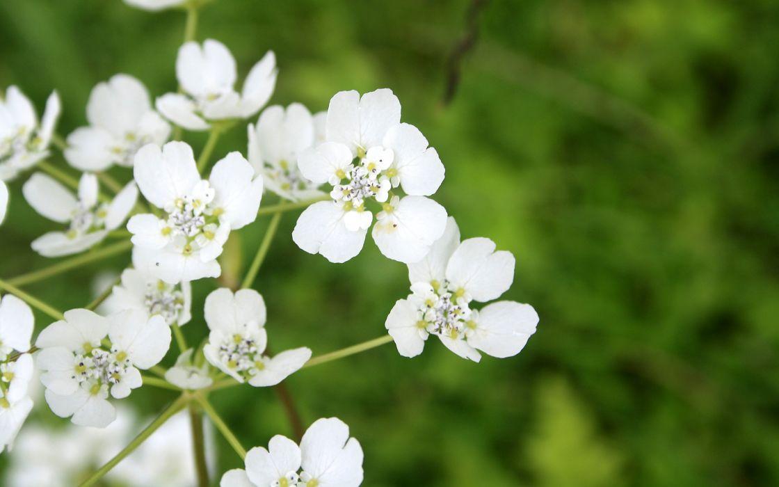 White tiny flowers wallpaper 2560x1600 6704 wallpaperup white tiny flowers wallpaper mightylinksfo