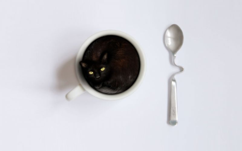 Cat in a coffee cup wallpaper