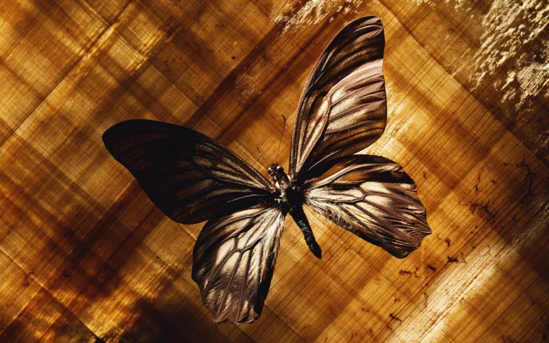 Interesting nature butterfly wallpaper