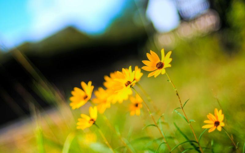 Yellow tiny beautiful flowers wallpaper