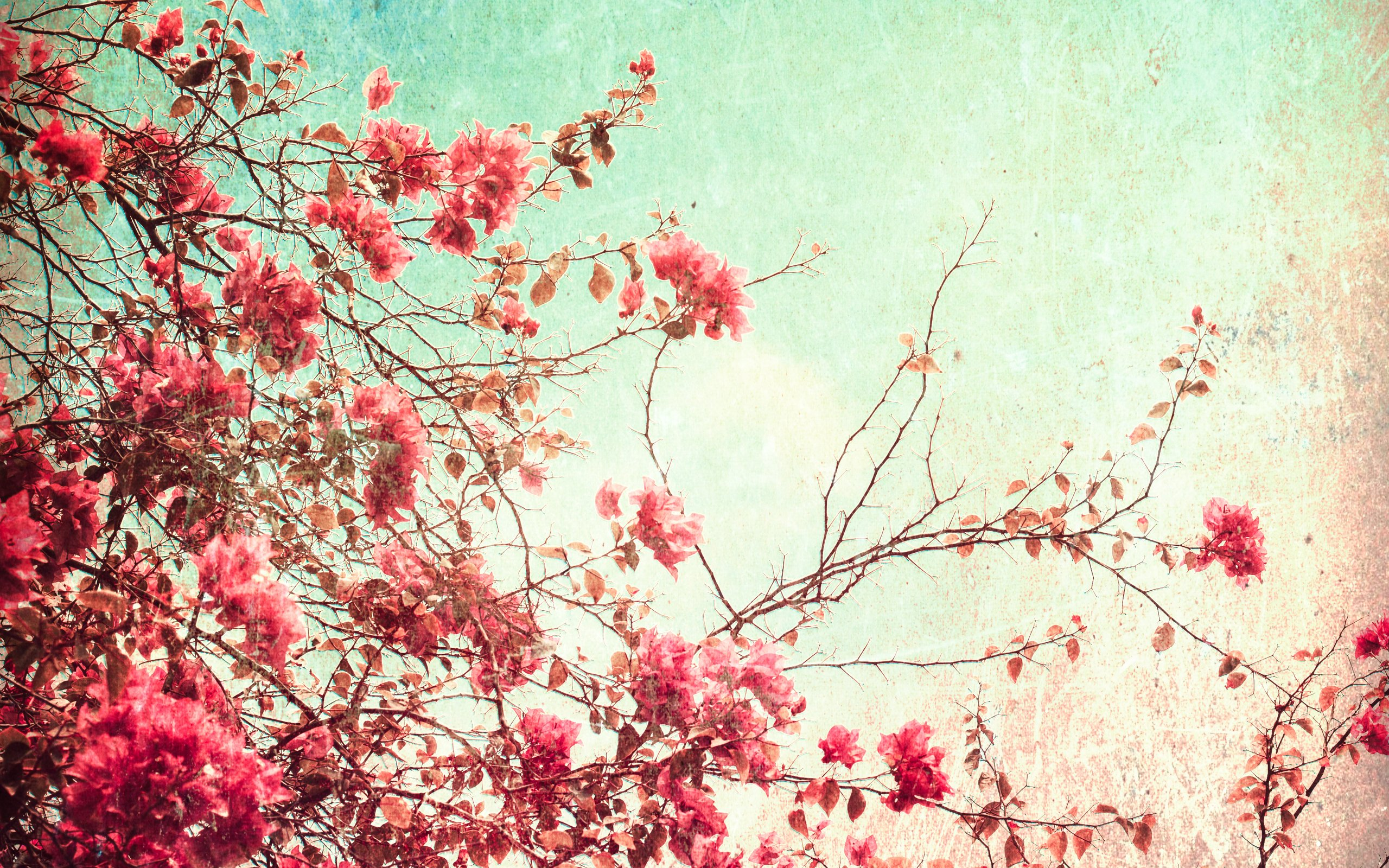 Flowers pink wallpaper 2560x1600 6799 wallpaperup mightylinksfo Image collections