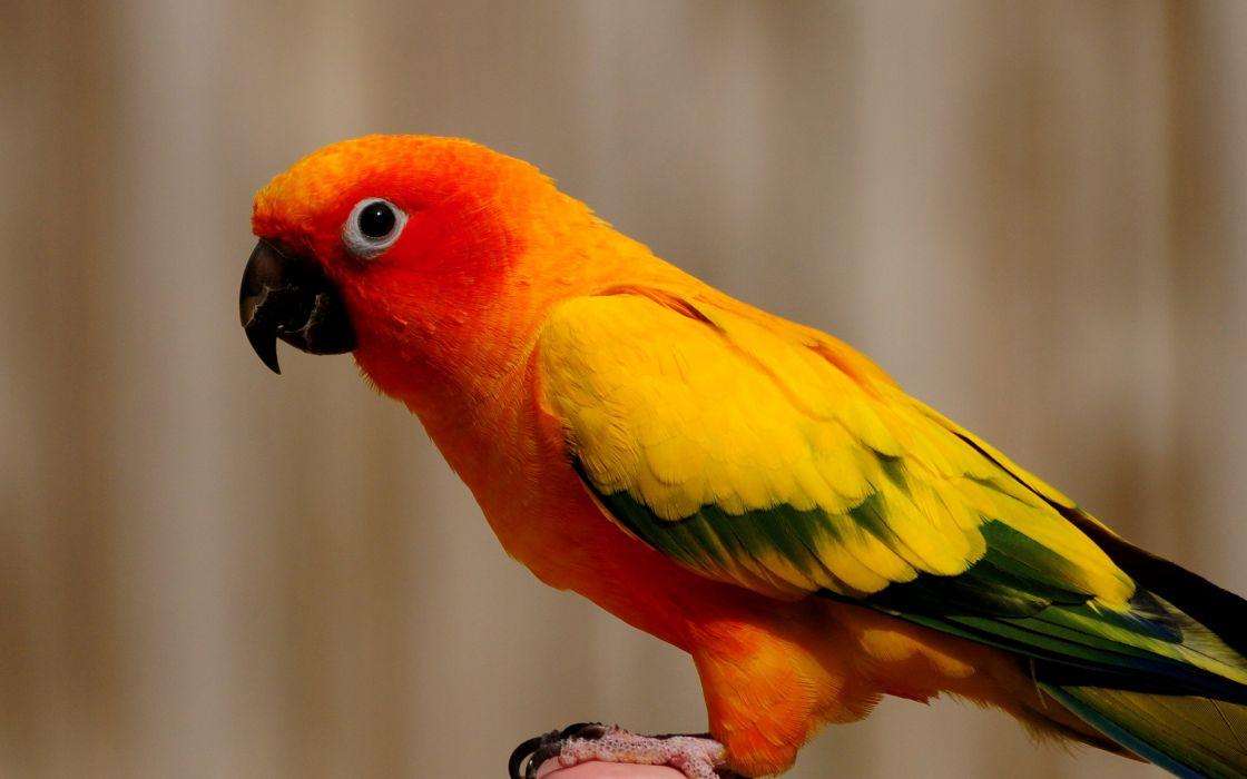 Colorful parrot wallpaper