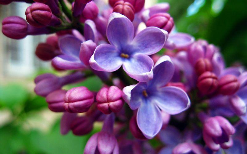 Purple beautiful flowers wallpaper