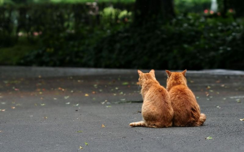 Orange cats wallpaper