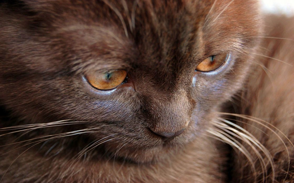 Cat closeup wallpaper