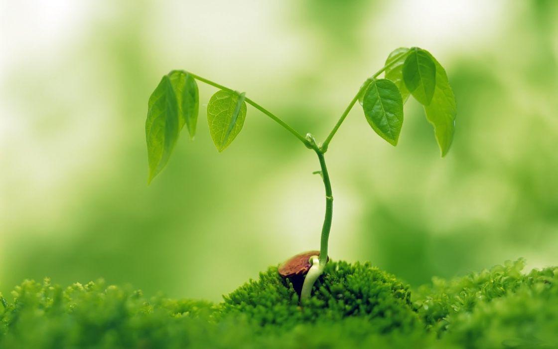 Growing plant wallpaper