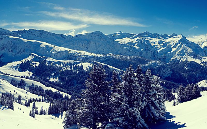 Superb winter forest view wallpaper