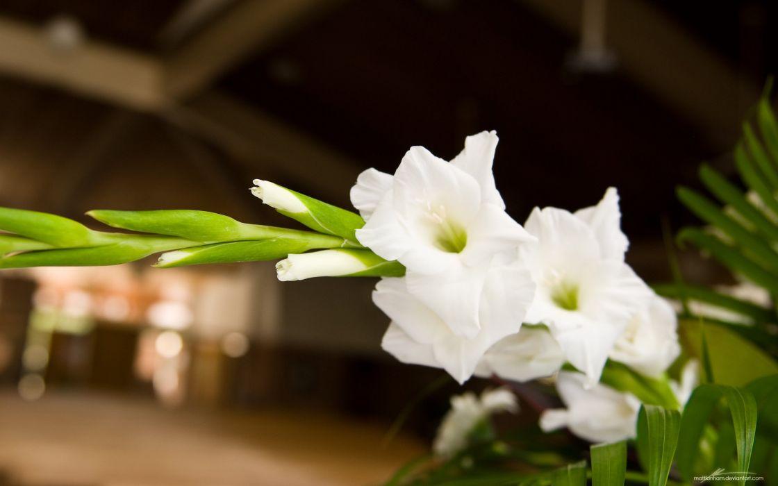 White flower hd wallpaper