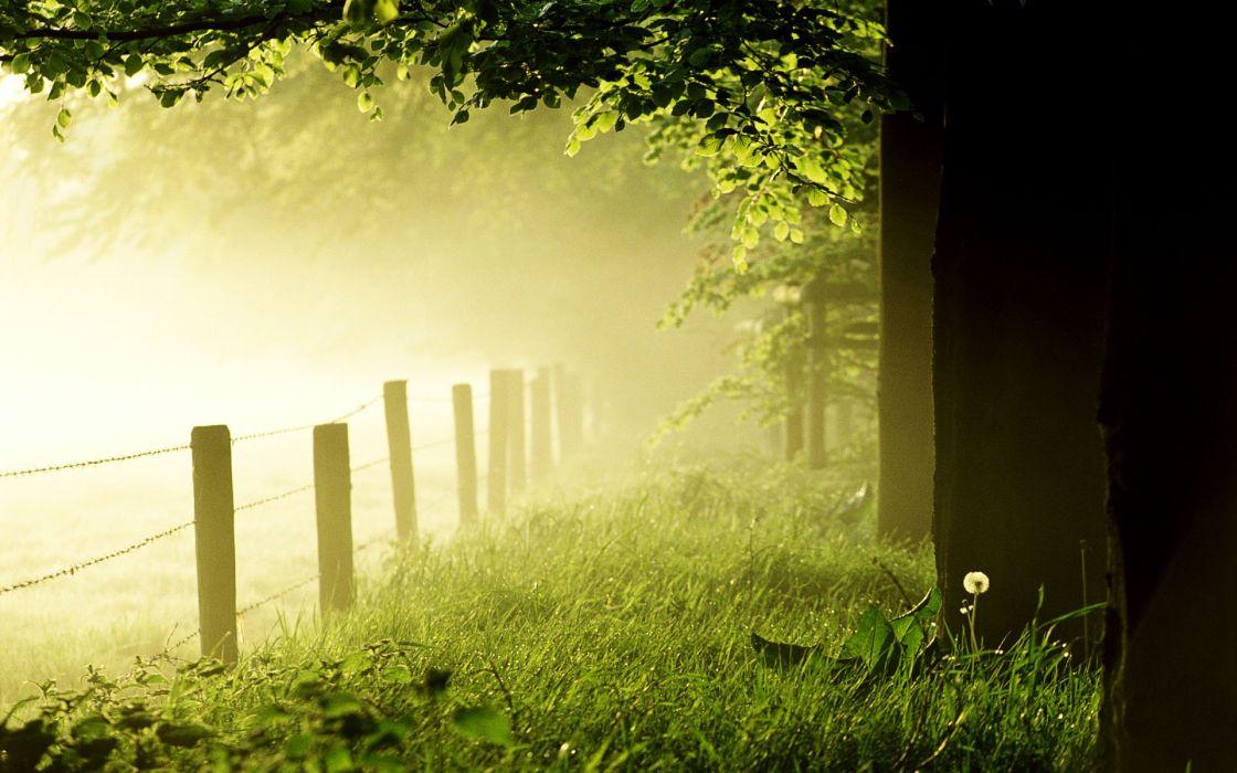 Fog nature wallpaper