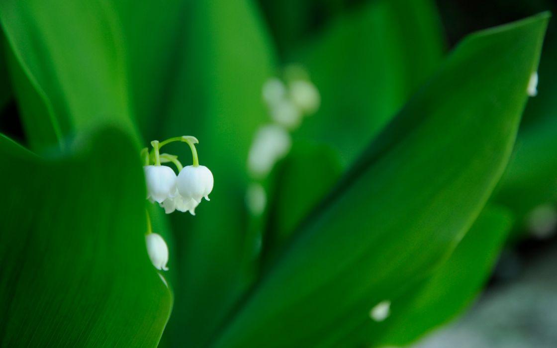 White tiny flower wallpaper
