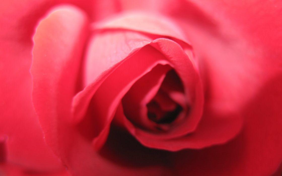 Rose center wallpaper