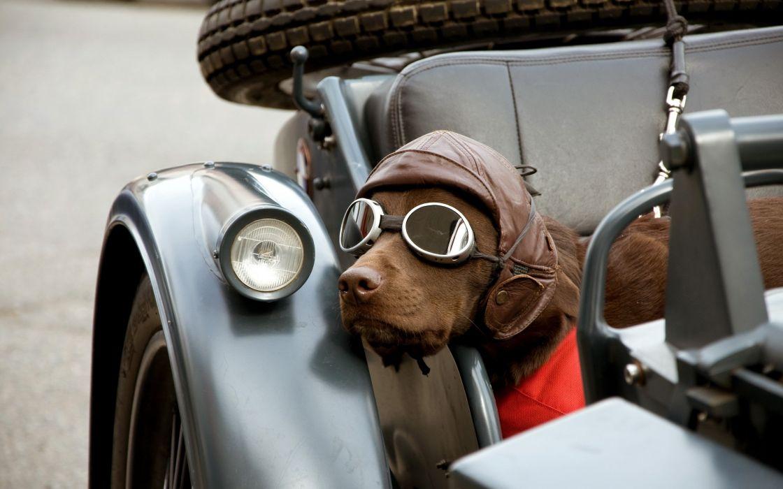 Motorcycle passenger dog wallpaper