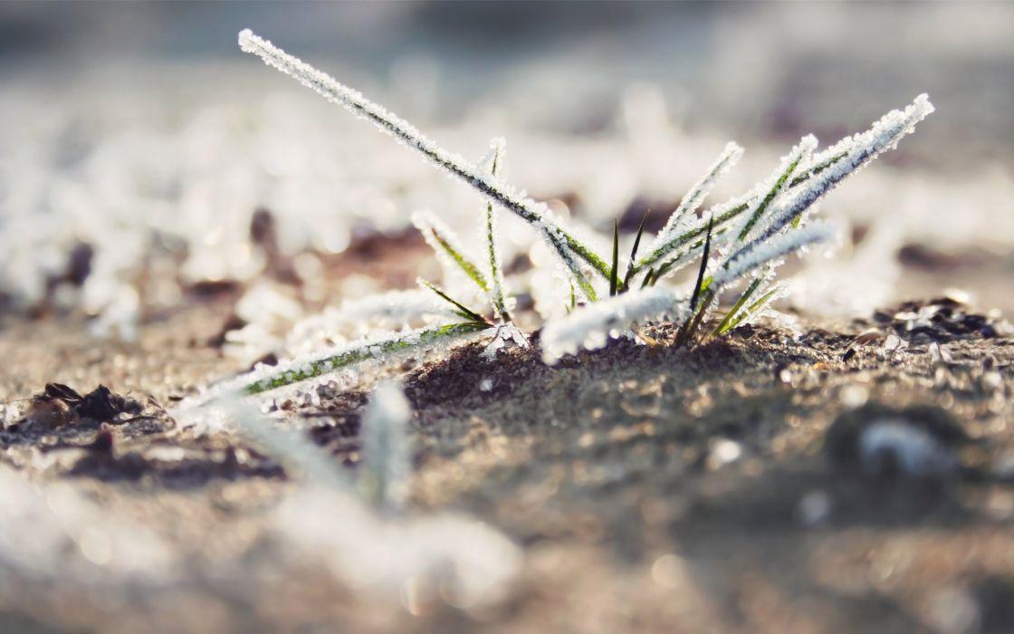 Snow dew on grass wallpaper