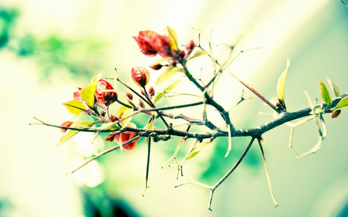 Plant steam and red leaves wallpaper
