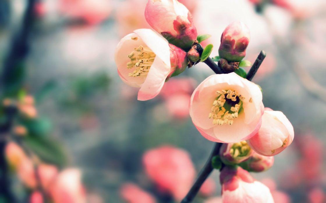 Beautiful flower wide wallpaper