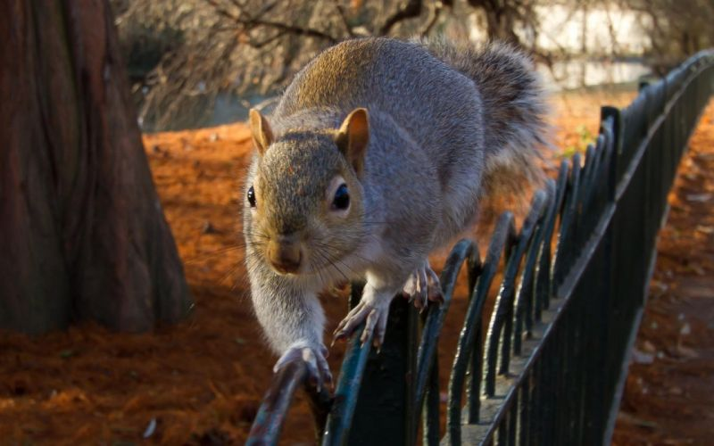 Squirrel balance wallpaper