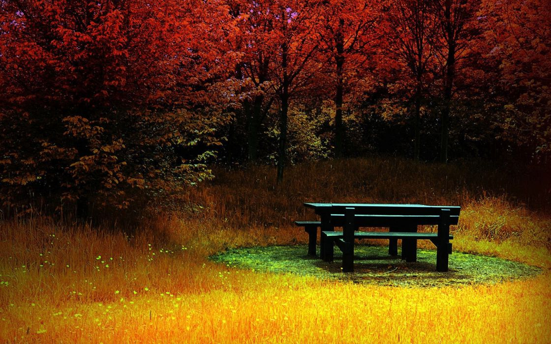 Forest corner during autumn wallpaper