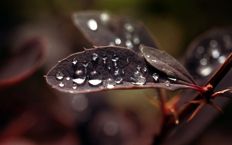 Dew drops on leaf macro wallpaper