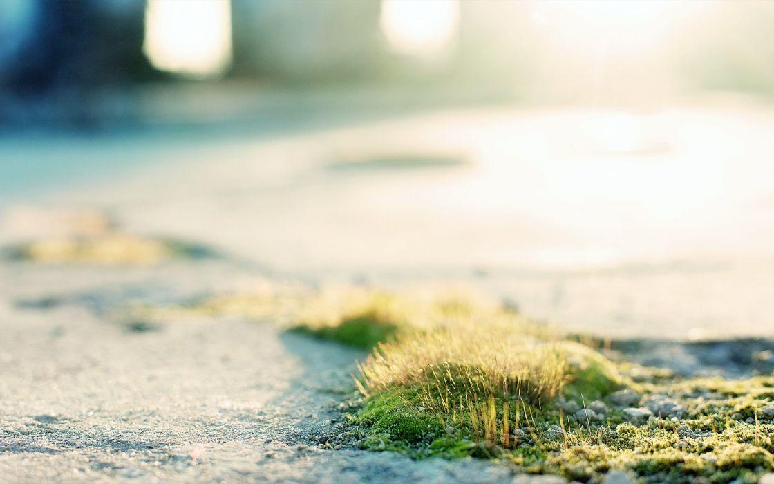 Green moss wallpaper