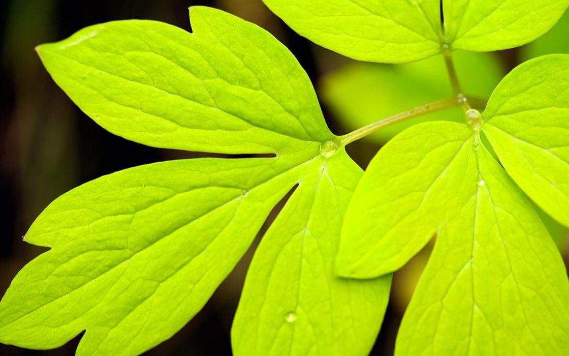 Green leaf high definition wallpaper