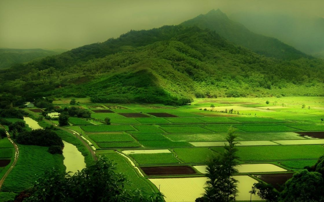 Agricultural farms wallpaper