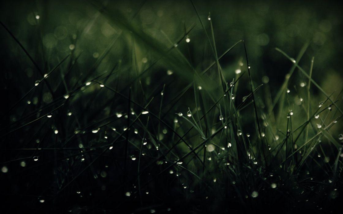 Green grass dew drops wallpaper