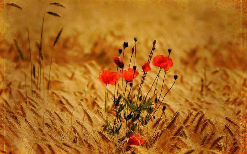 Beautiful flowers on wholegrain farms wallpaper