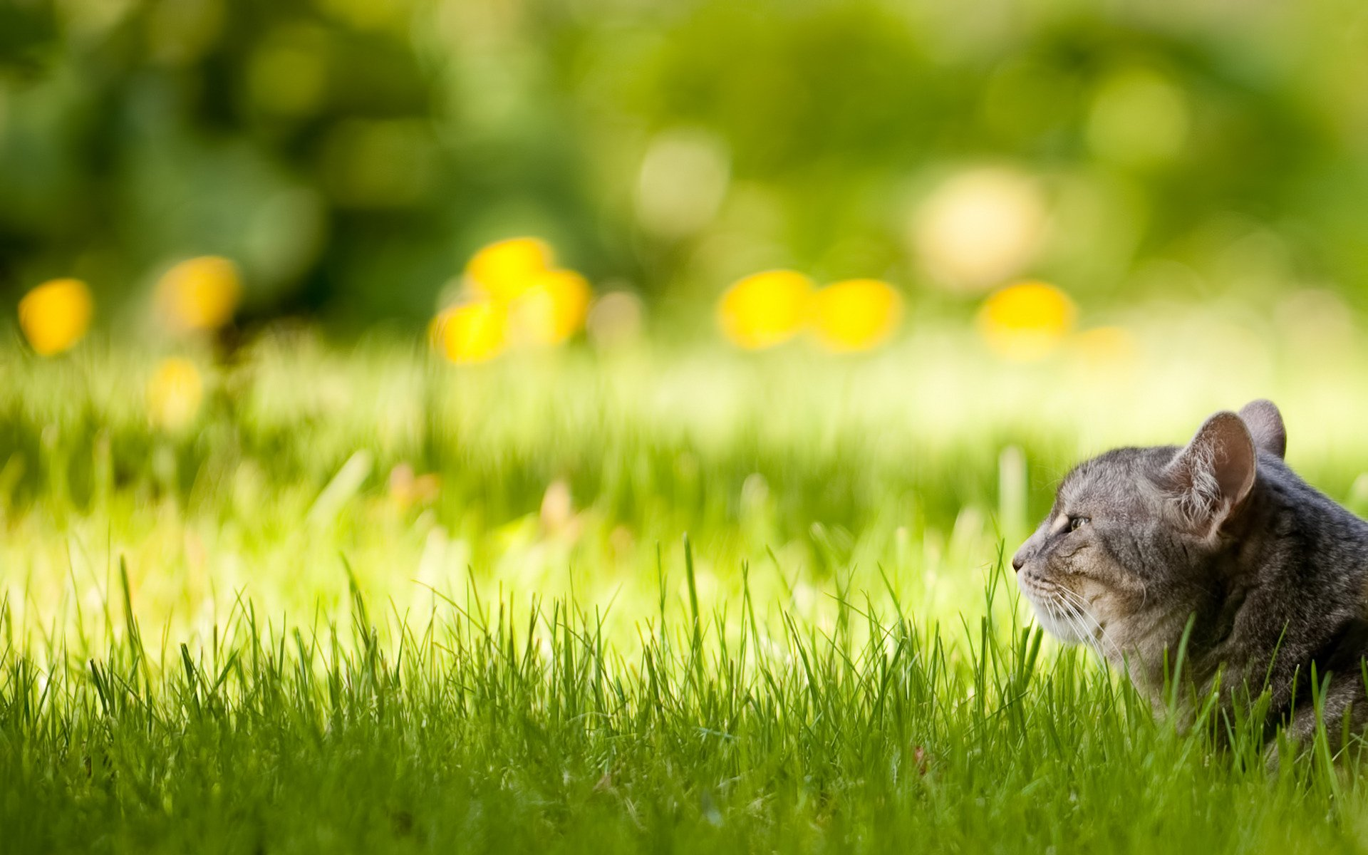 Котенок в траве  № 2954095 без смс