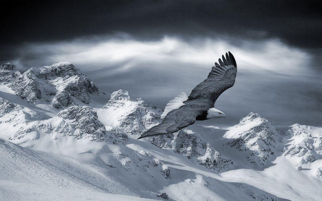 Eagle black and white wallpaper
